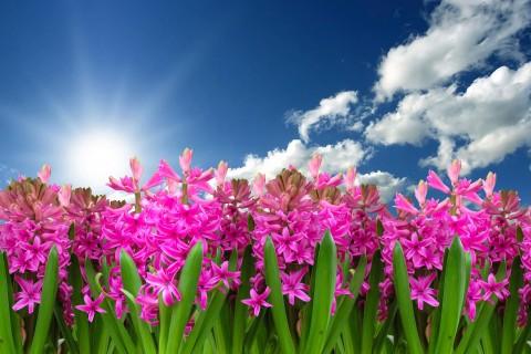 Kiermasz Wiosenny-Wywołajmy Wiosnę!